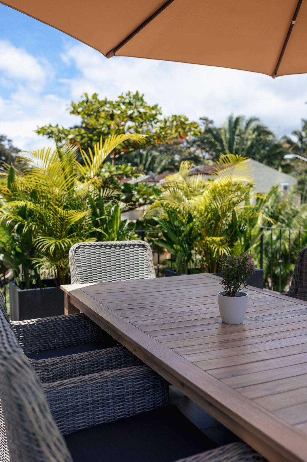 greenery as a privacy screen on the patio